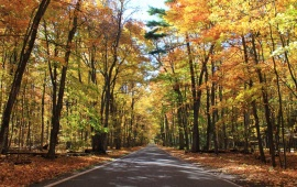"Fall colors along scenic M-119, the famous ""Tunnel of Trees"". (Photo: Jeremy Hammond)"