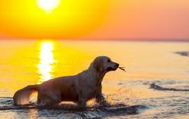 Northern Michigan vacation rentals: pet friendly rentals