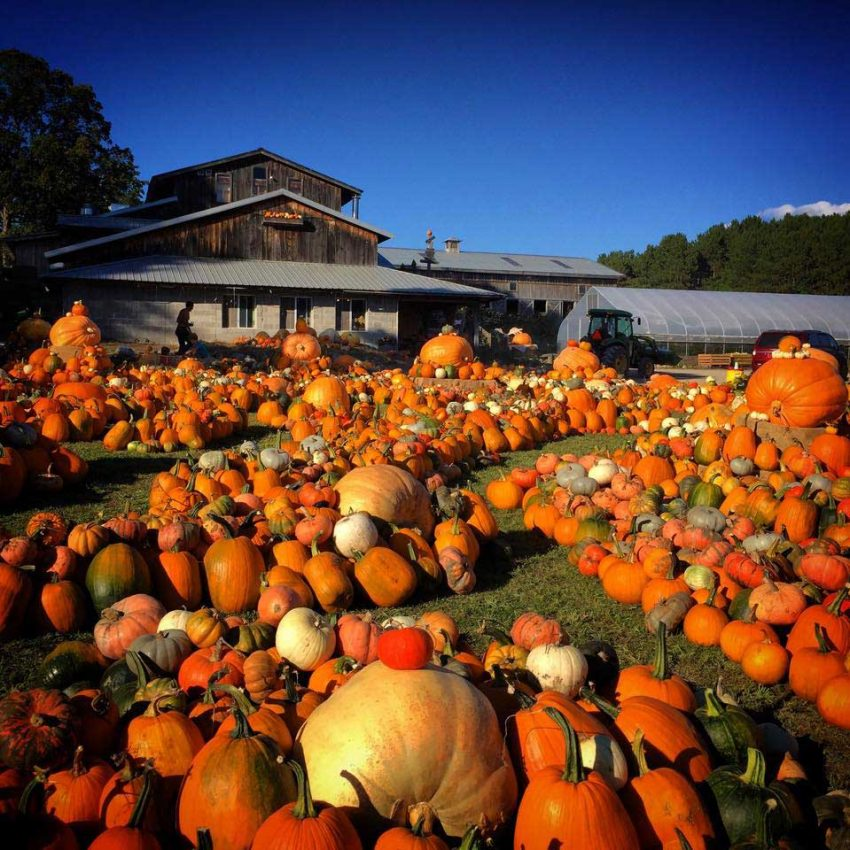A plethora of pumpkins at Pond Hill Farm (Photo: Pond Hill Farm)