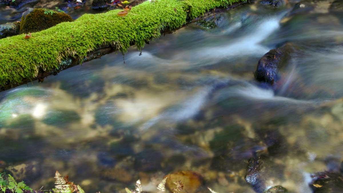 Five Mile Creek Nature Preserve (Photo: Charles Dawley/CC BY-NC-ND 2.0)