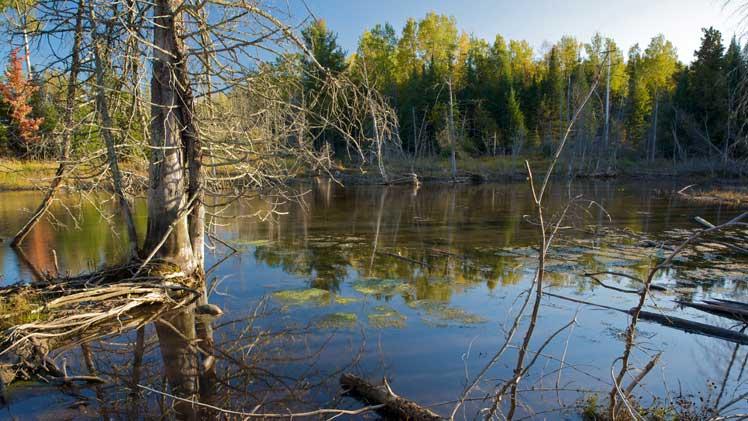 Hailand and Helstrom Preserve Complex | Northern Michigan Nature Preserves