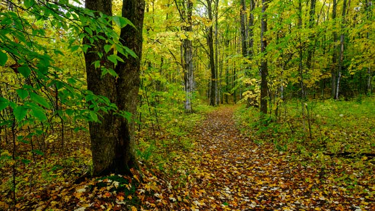 Offield Family Nature Preserve | Northern Michigan Nature Preserves