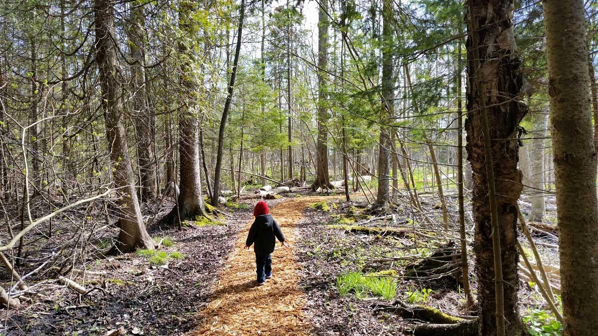 Thorneswift Nature Preserve | northern Michigan nature preserves