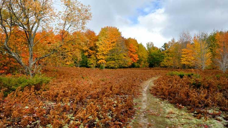 Watson and Schott Preserve Complex | Northern Michigan Nature Preserves