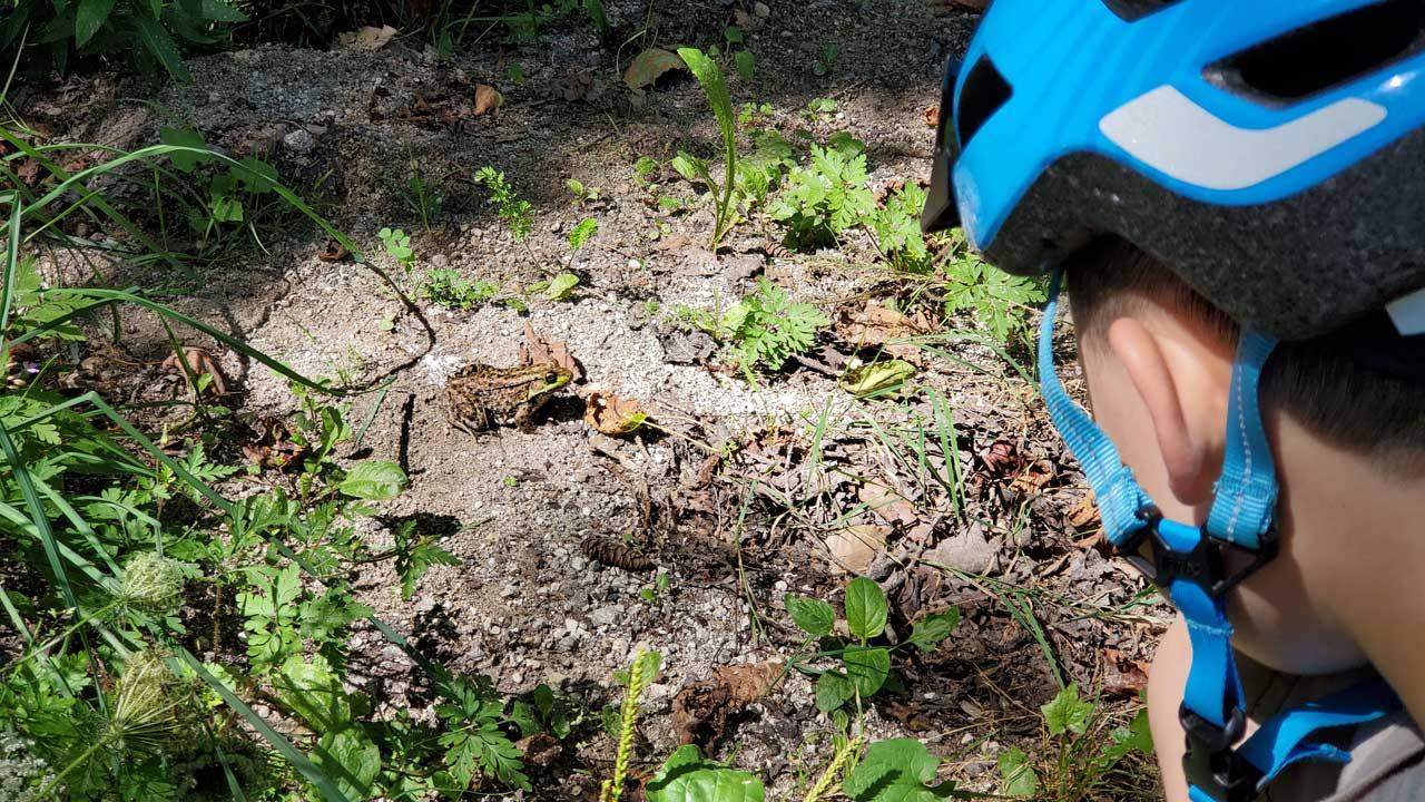 Mackinac Island frog
